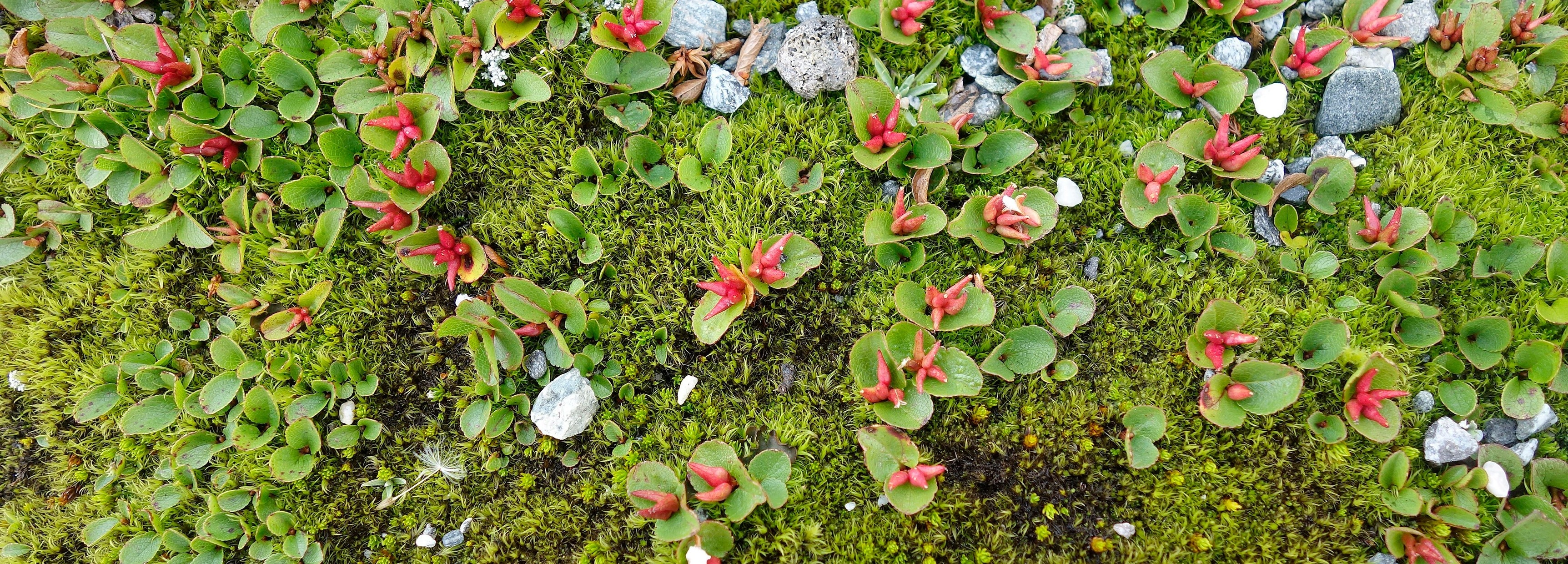 The world's tiniest tree | BBC Earth