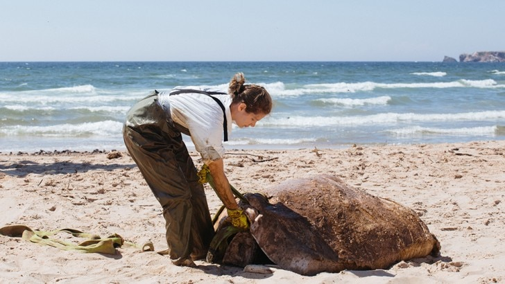 woman and dead whale