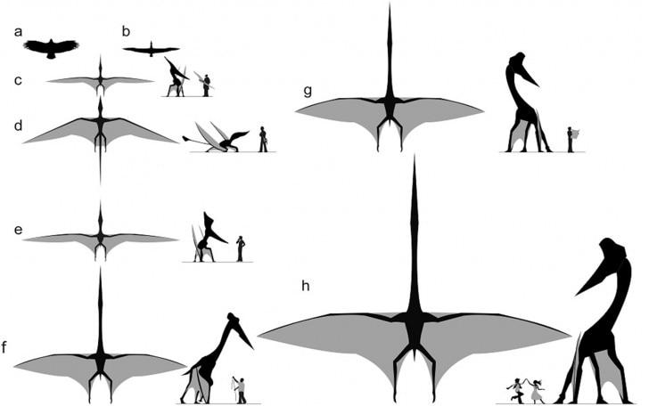 drawings of giants