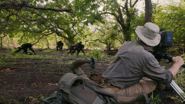 cameraman filming chimps