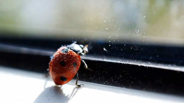 A ladybird resting against a window frame