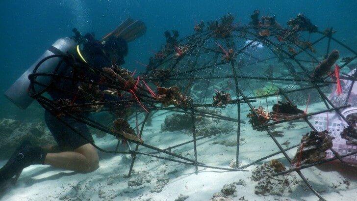 Divers installing a new Biorock construction