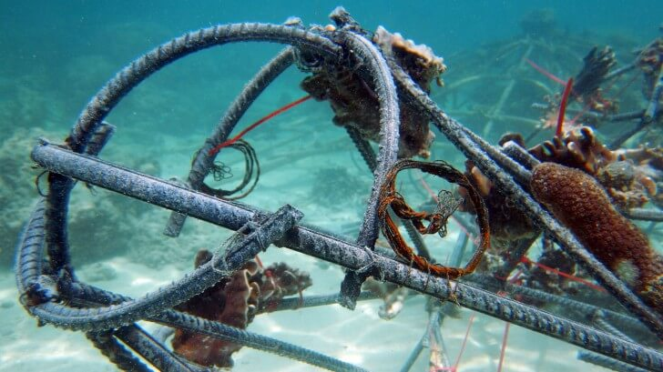 Wires attached to steel frames to encourage the growth of coral reefs