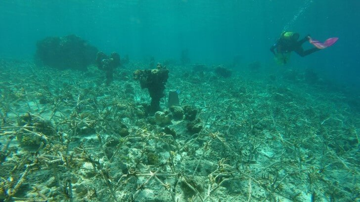 A region of ocean floor just after construction of a coral spider rehabilitation zone