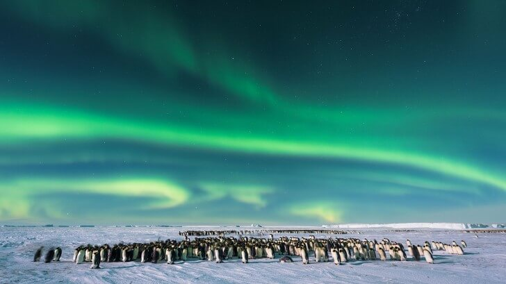 The Southern Lights - aurora australis - over an Emperor penguin colony in Antarctica
