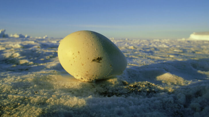 A penguin egg in the snow