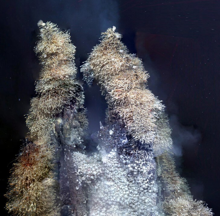 Stacks of 'Hoff' crabs in the hydrothermal vents of the Southern Ocean