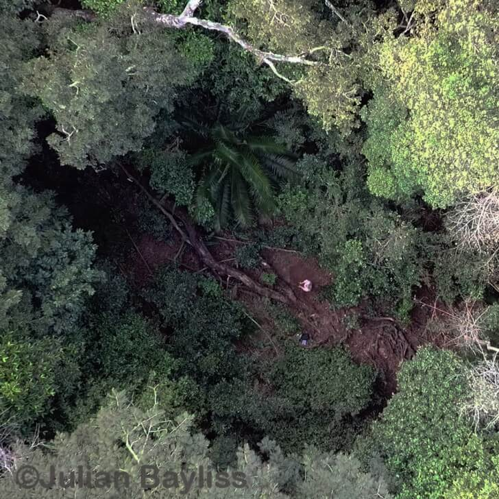 A clearing in the dense forest © Dr Julian Bayliss