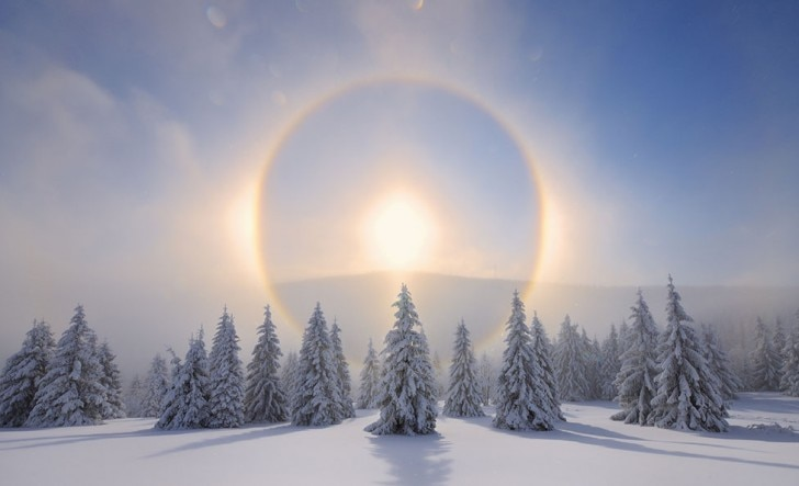 Sun halos in a snowy forest