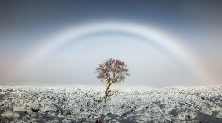 A colourless rainbow above a tree