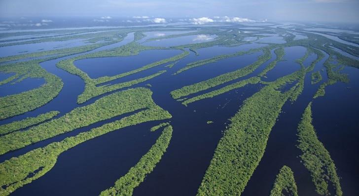Birds eye view of the Amazon rainforest