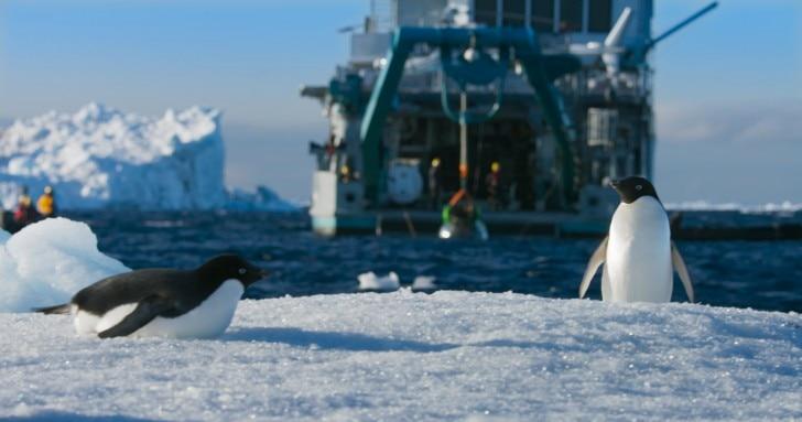 Adélie penguins and M/V Alucia