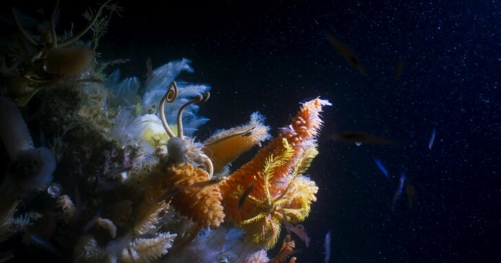 2m tall giant sponges in the deep waters of the Antarctic Sound
