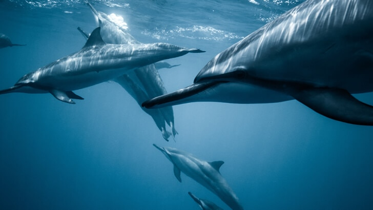 Dolphins communicating underwater