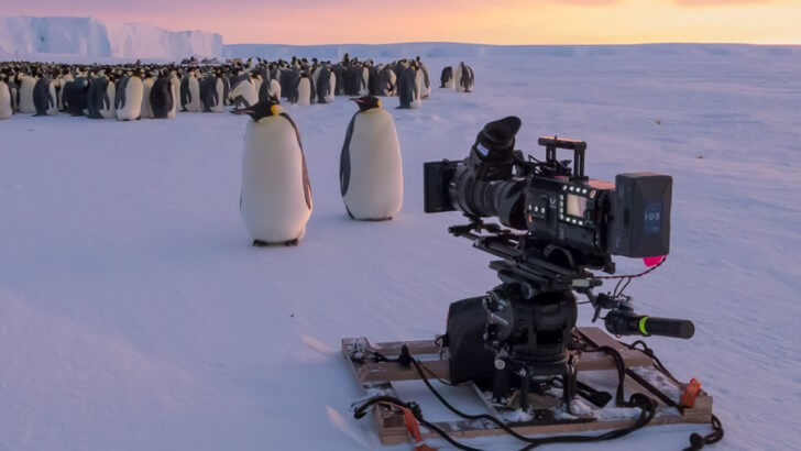 Two Emperor penguins stand in front of a camera rig in the Antarctic