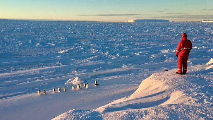 Lindsay McCrae films Emperor Penguins in the Antarctic