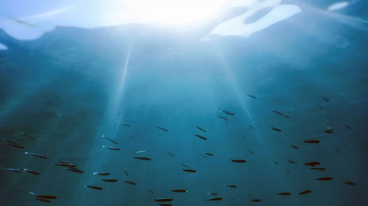 A shoal of fish just below the surface of the waves with sunlight breaking through
