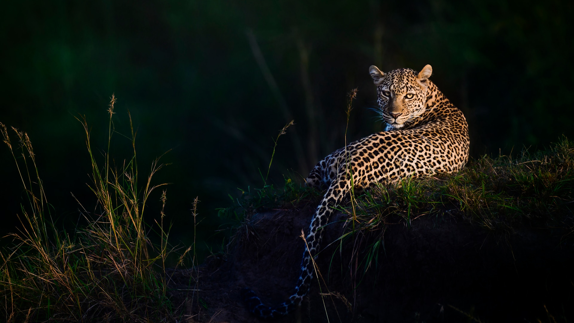 A leopard sitting in the jungle