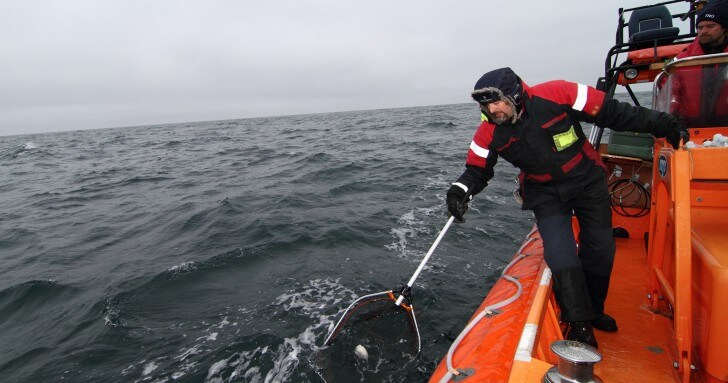 Patrick Miller tagging whales
