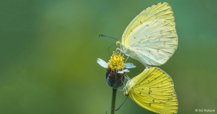 Butterfly on the plant