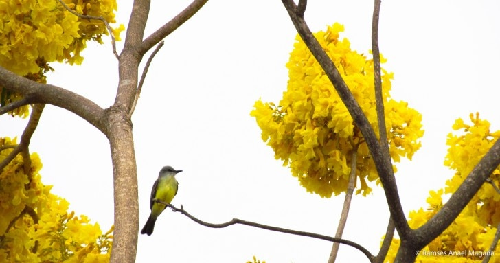 Yellow tree with bird standing on its branch