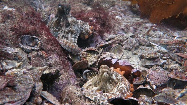 Octopus on the ocean floor