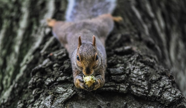Squirrel grabbing a nut on the tree