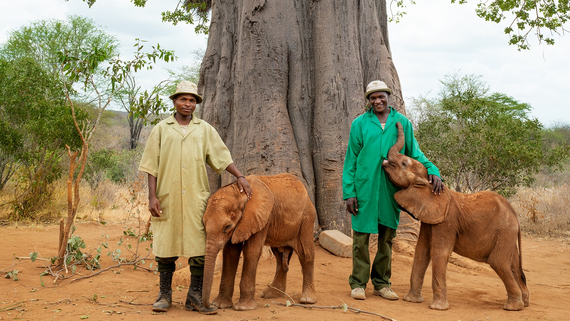 Two men standing with baby elephants