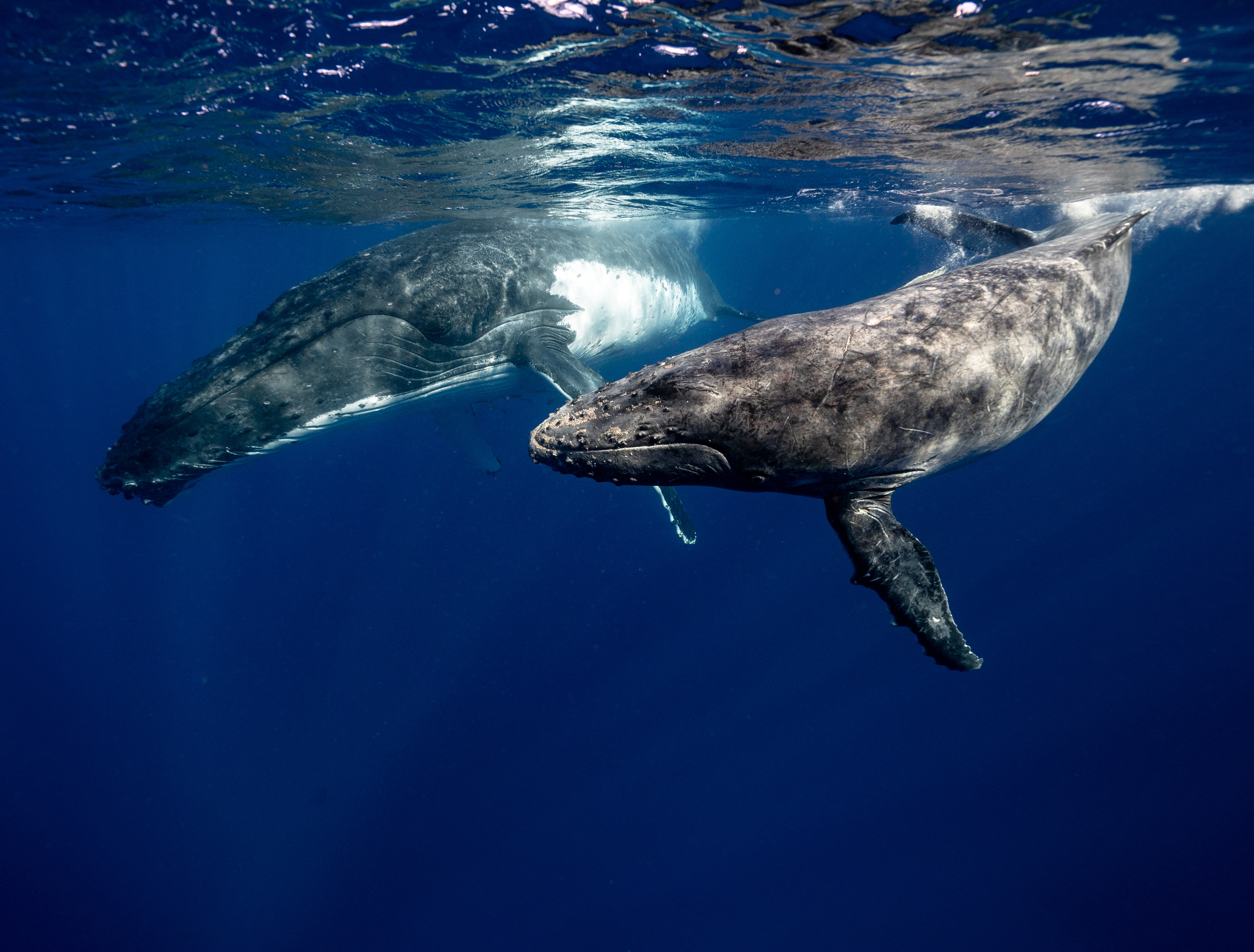 Whales swimming in the ocean