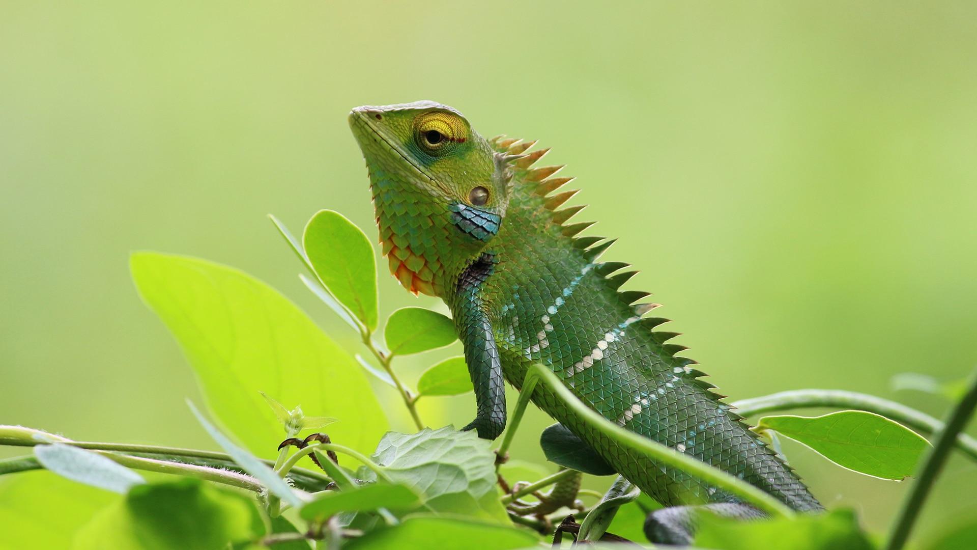 Lizard perches on greenery