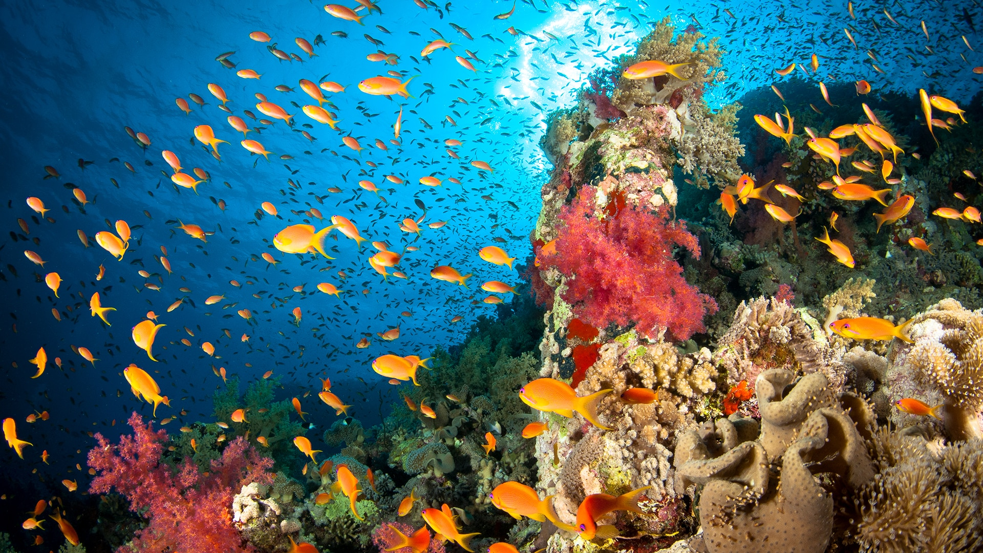Coral Reef and marine life