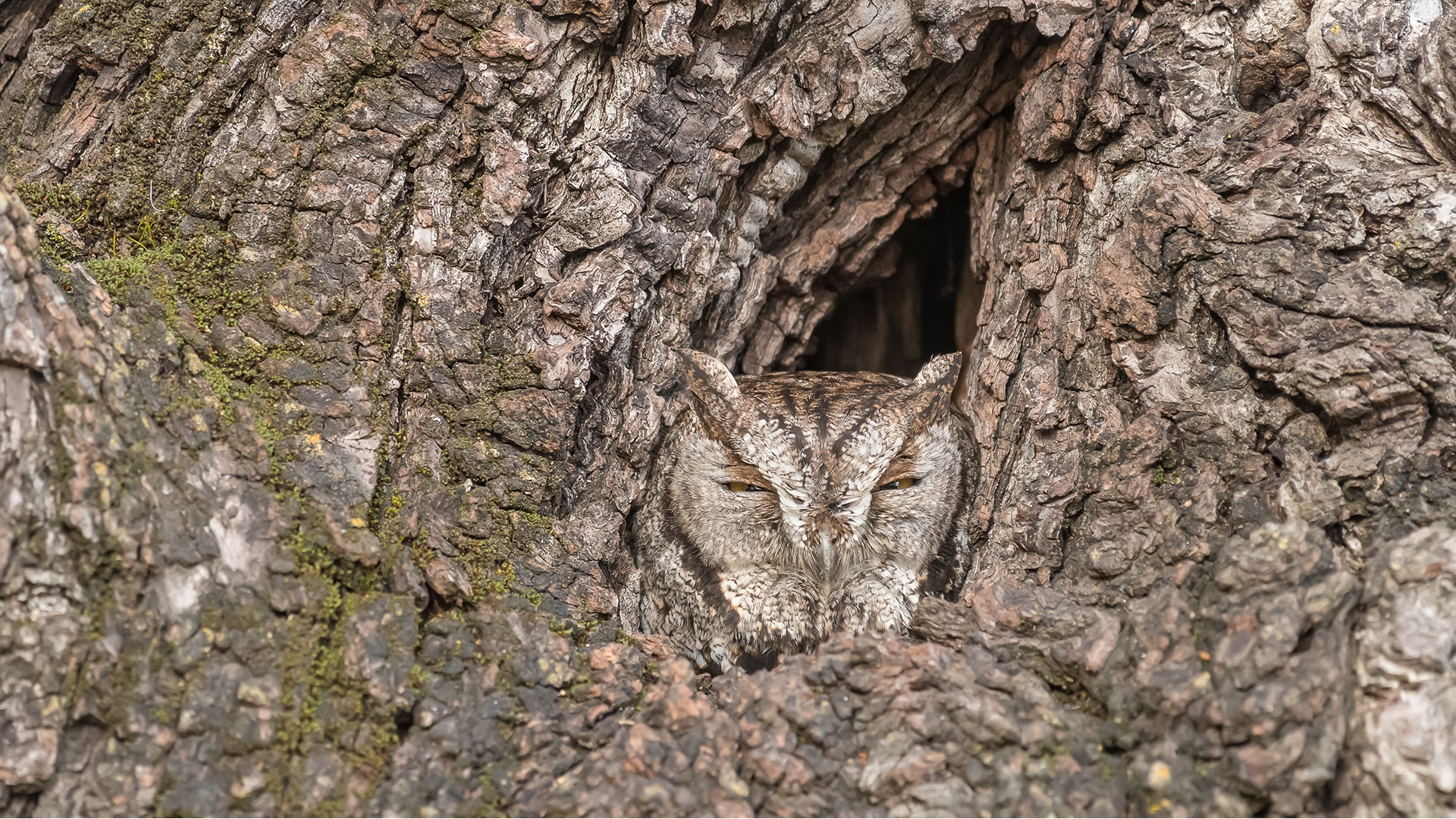 Owl well camouflaged