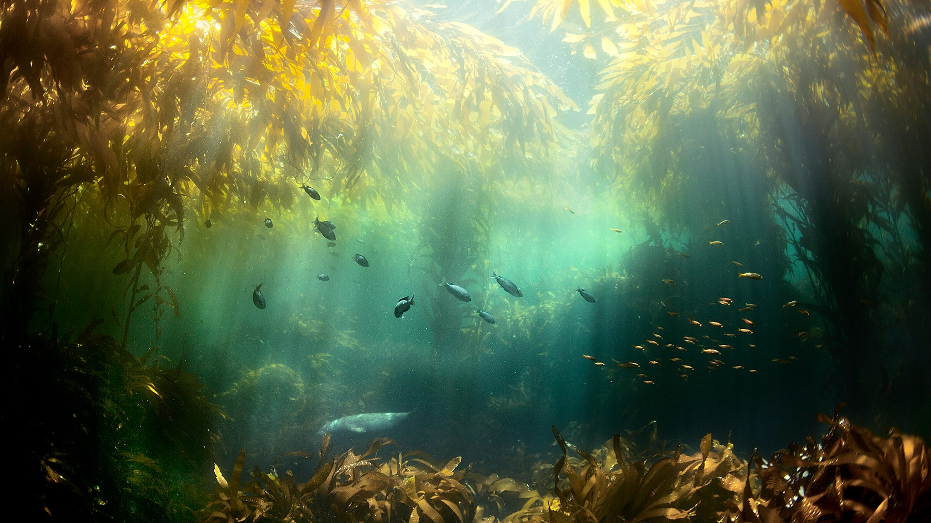 Seagrass and fish species