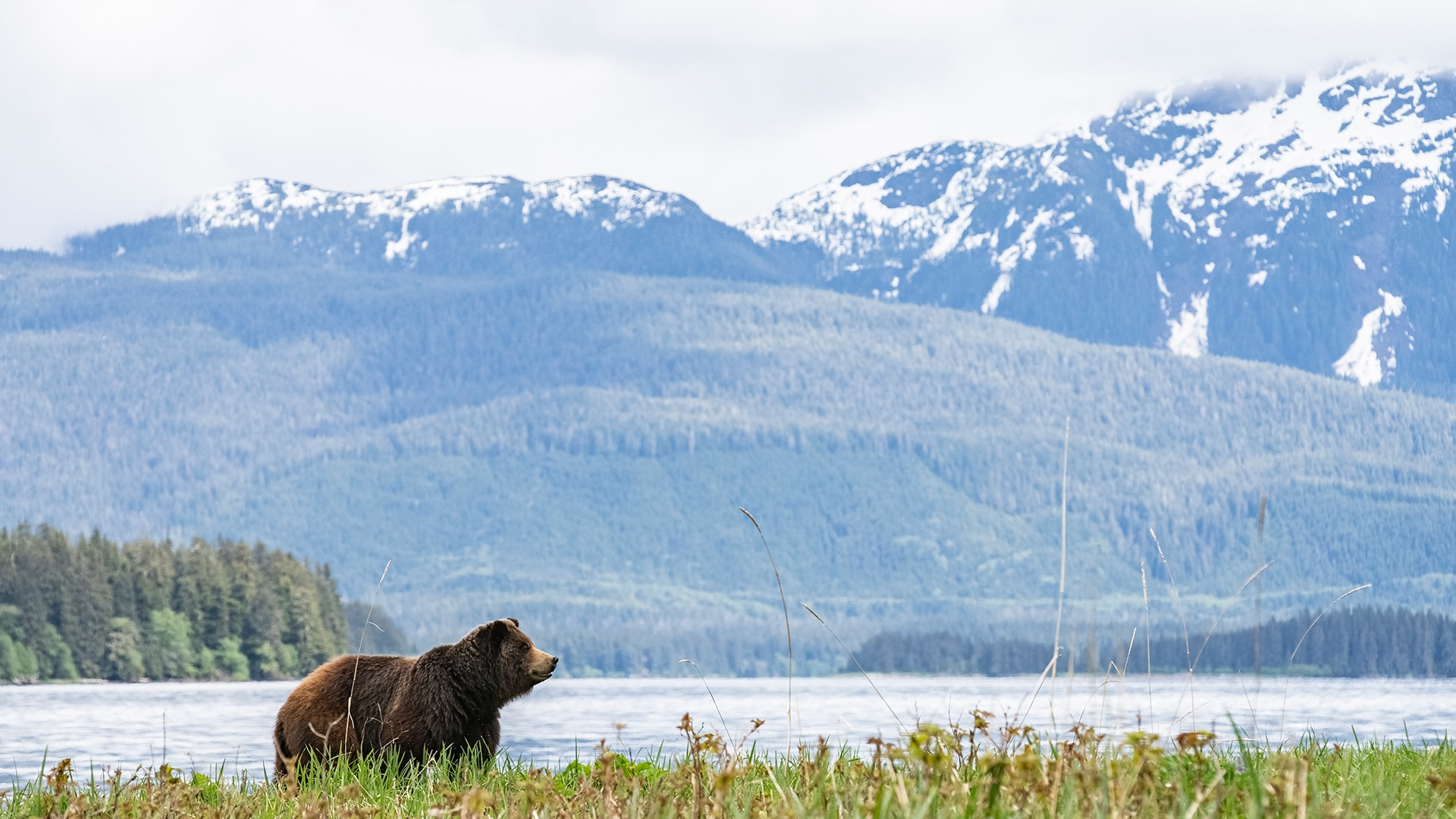 Brown bear standing in front of mountains
