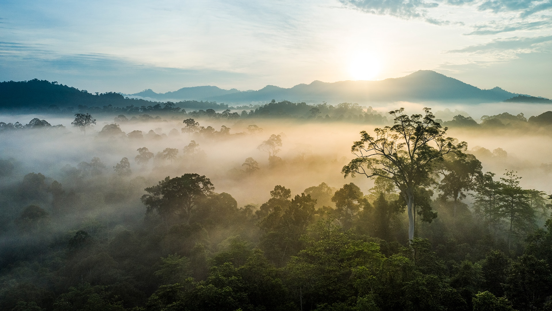 Borneo landscape with sun breaking through mountains and trees
