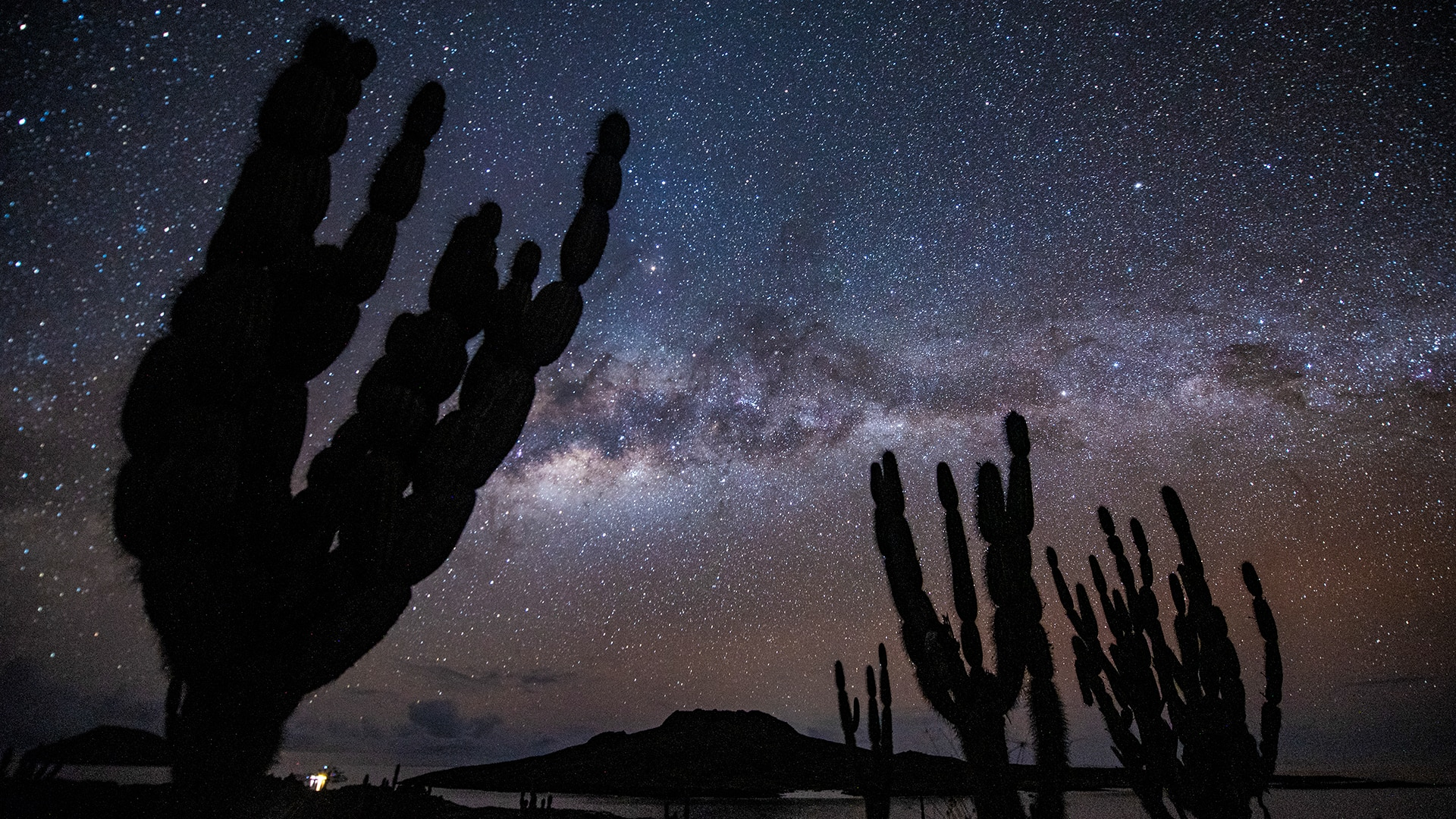 Candelabra cactus with the starry sky in the background