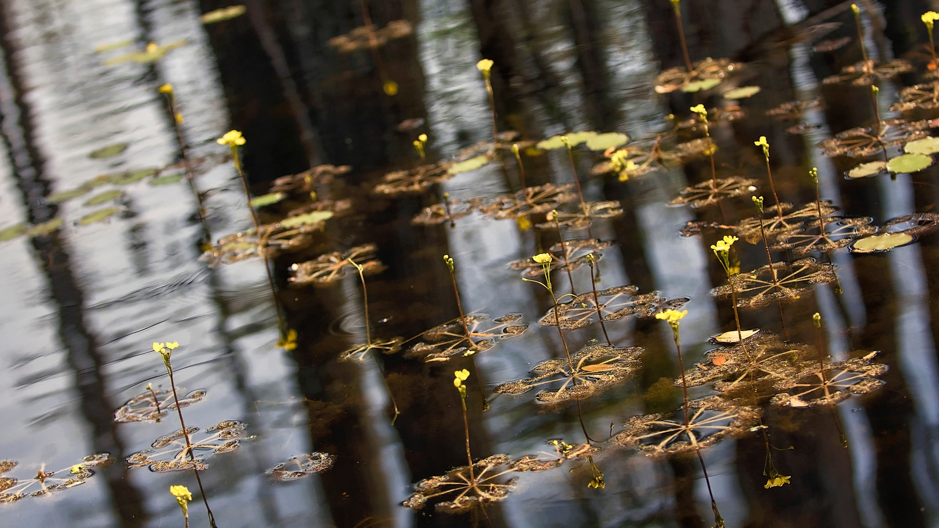 Cluster of plants with wide roots floating on pond