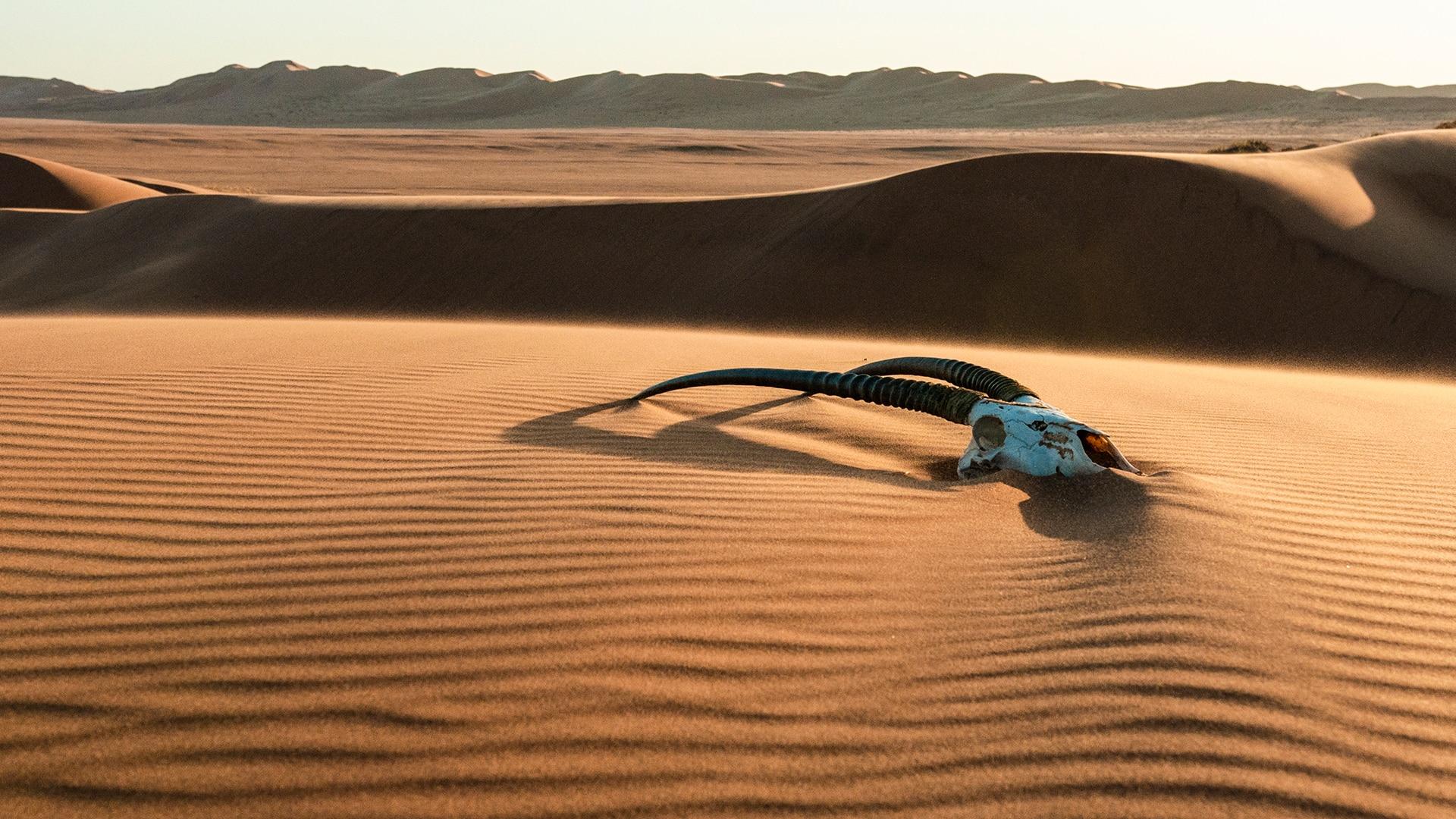 Animal skull on a desert in Namibia