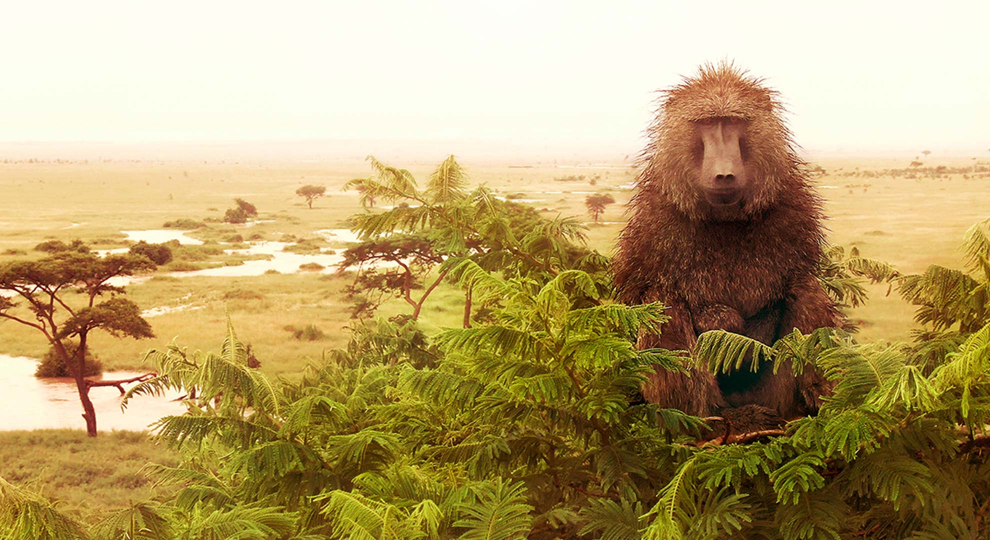 Bakari the Baboon Serengeti 2