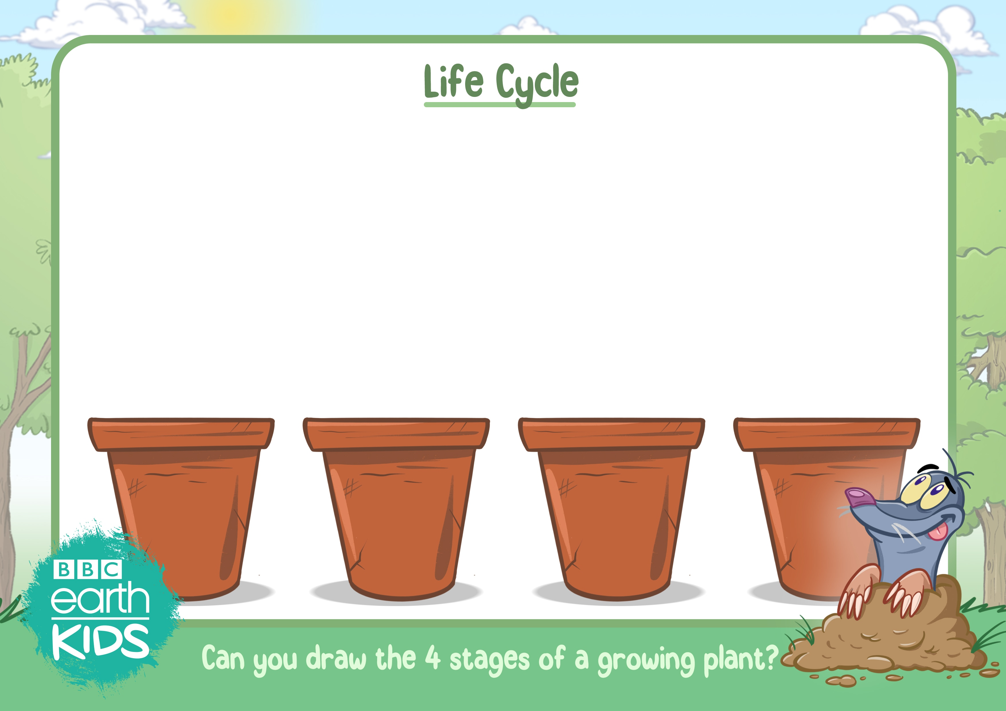 The four stages of growing a plant worksheet