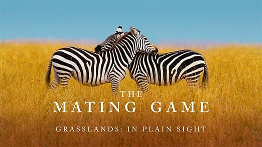 Grasslands: In Plain Sight