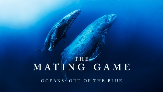 Oceans: Out of the Blue