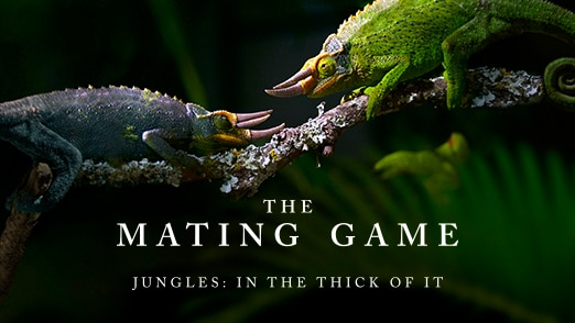 Jungles: In The Thick Of It