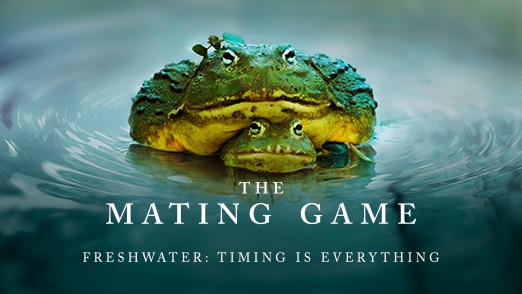 Freshwater: Timing Is Everything