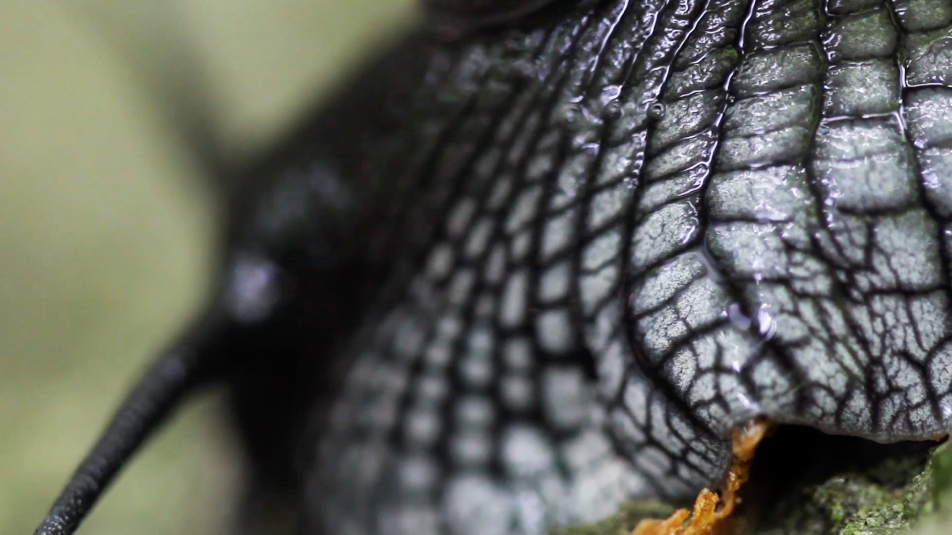 Extreme close up of snail